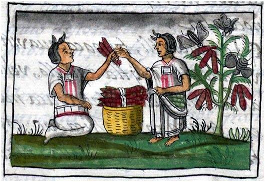 Рисунок из Флорентийского кодекса